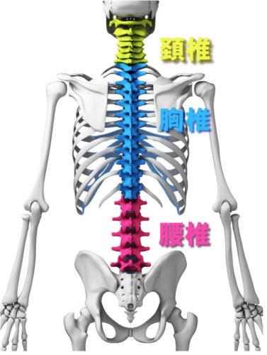 spinal column2